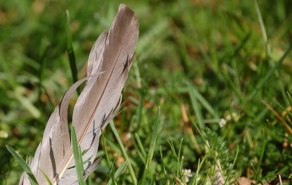 Eine Feder im Gras