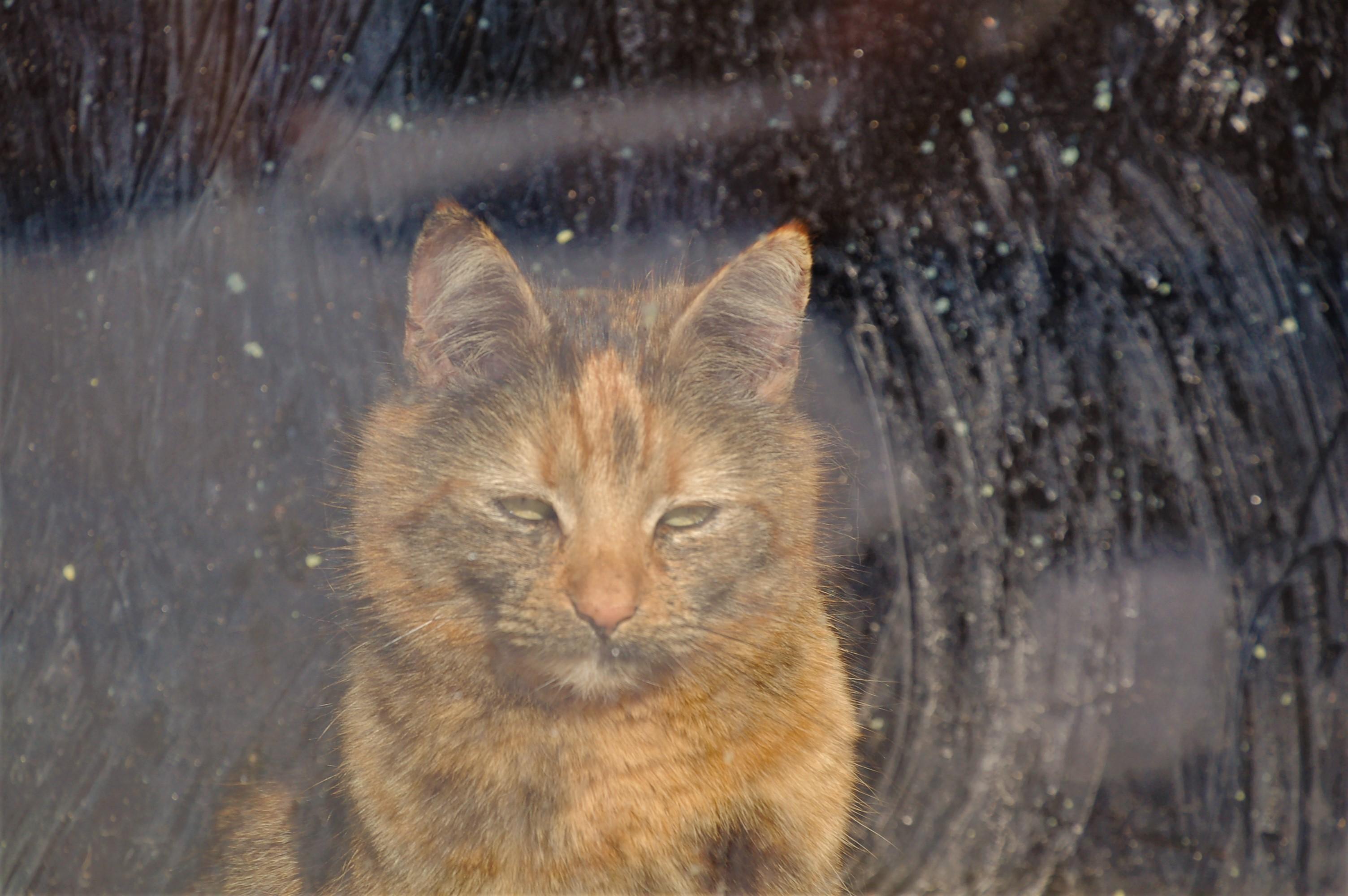 Die Katze Sina