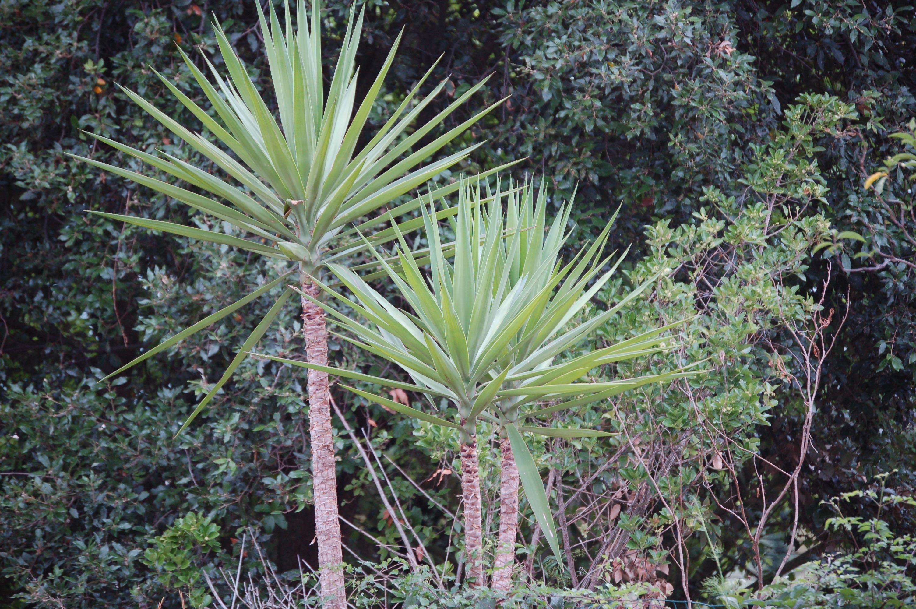 Drei einsame Palmen