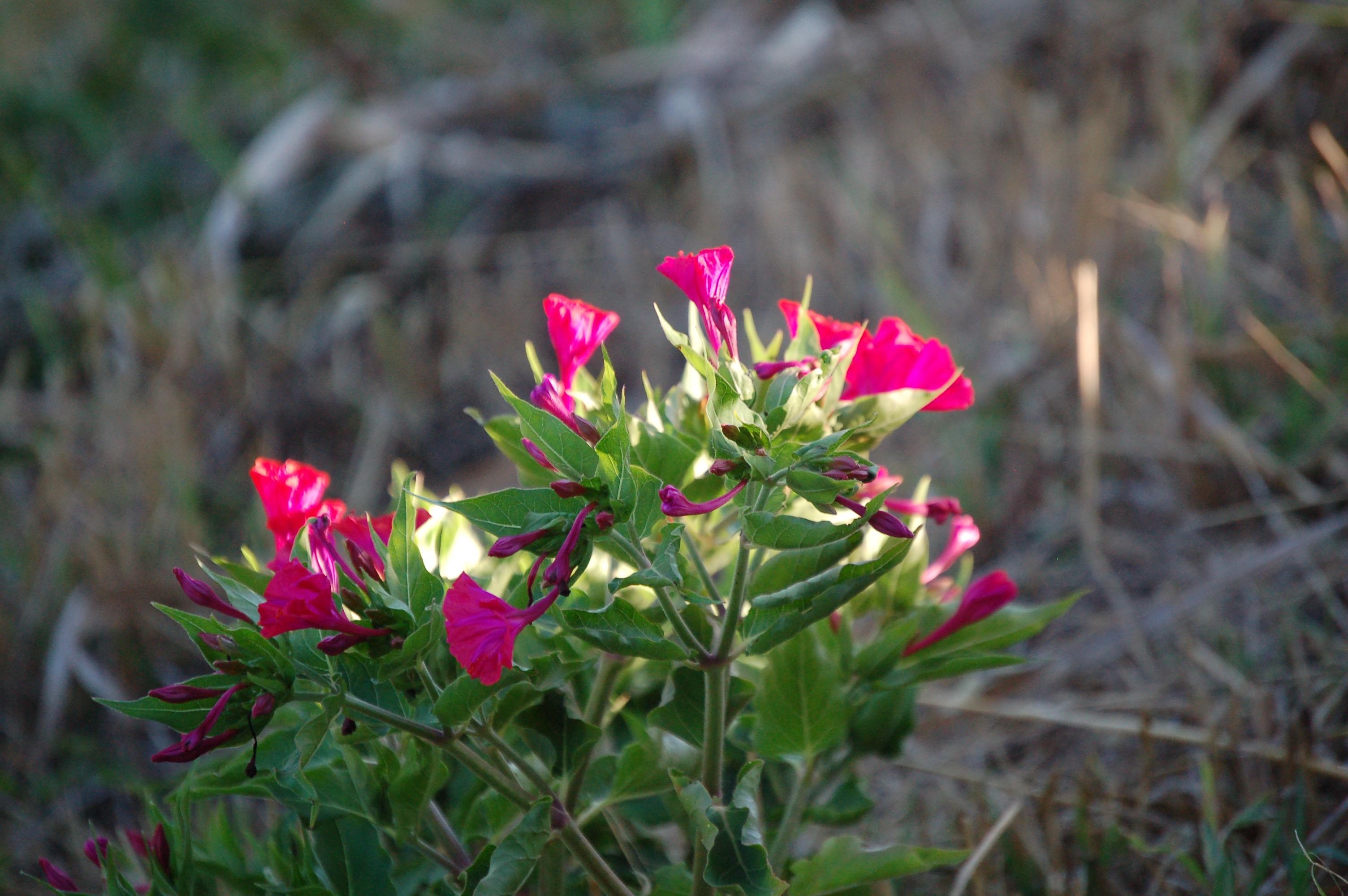 Ein Blumenstrauß der Natur